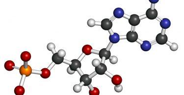 Adenosine Triphosphate